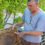 Alain explique comment s'organise les ruches
